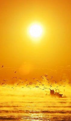 Sea of Golden Light - ©YoungHwan Kim (via 500px)