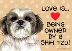 Love is… being owned by a Shih Tzu (puppy cut / short hair cut) Express Yourself Sign