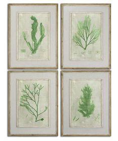 Γγρ│ Algues - Gravures magnifiquement encadrées.