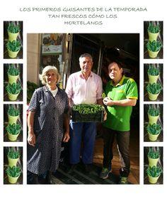 Guisantes de Palencia