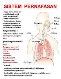 Pendidikan: Organ Pernafasan Dan Fungsinya