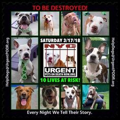 """***10 LIVES TO BE DESTROYED 03/17/18 @ NYC ACC***SO MANY GREAT DOGS ARE BEING KILLED: Puppies, Throw Away Mamas, Good Family Dogs. This is a HIGH KILL """"CARE CENTER"""" w/ poor living conditions . View tonight's list here: https://newhope.shelterbuddy.com/Animal/List and https://www.facebook.com/ACC.OfficialAtRiskAnimals/"""