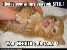 For da Rest ob Mai Life - LOLcats is the best place to find and submit funny cat memes and other silly cat materials to share with the world. We find the funny cats that make you LOL so that you don't have to. Funny Animal Jokes, Funny Cat Memes, Cute Funny Animals, Funny Animal Pictures, Cute Baby Animals, Funny Cute, Cute Cats, Cute Kitten Pics, Crazy Animals