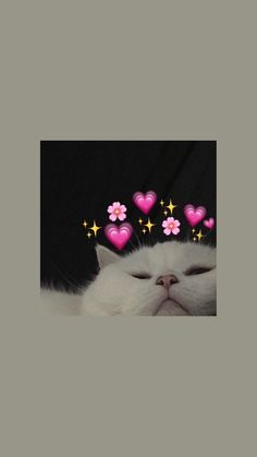 Cute Tumblr Wallpaper, Cute Cat Wallpaper, Iphone Wallpaper Tumblr Aesthetic, Bear Wallpaper, Aesthetic Pastel Wallpaper, Animal Wallpaper, Pretty Wallpapers, Cute Cartoon Wallpapers, Iphone Wallpaper Cat