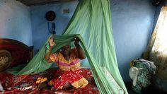 #Paludisme : résultats «très encourageants» d'un vaccin expérimental - Portail Humanitaire: Portail Humanitaire Paludisme : résultats «très…