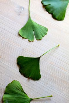 Ginkgo leaves. We had a tree in the front yard my whole life. I always took a leaf or two with me when I went on trips to remind me of home.
