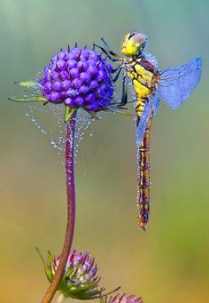 The coolest and most beautiful in nature of insects Photos Beautiful Bugs, Beautiful Butterflies, Amazing Nature, Beautiful Creatures, Animals Beautiful, Cute Animals, Bugs And Insects, Tier Fotos, Mundo Animal