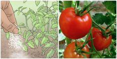 Vegetables, Garden, Flowers, Plants, Terrace, Balcony, Veggies, Lawn And Garden, Florals