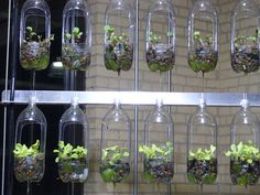 indoor gardening idea! Spray painting tthe bottles would really look great!