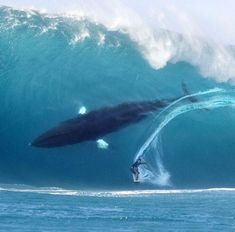 The image of a huge whale lurking in a big wave is a digital manipulation. In case you were fooled - check out SNOPES and all the research they did - this isn't the first time this photo has been used - the previous one had a giant shark! NOT REAL! DO YOUR RESEARCH.