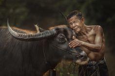 good friend - by Jakkree Thampitakkul