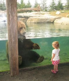 A brown bear reaches out to befriend a tiny visitor at the Columbus Zoo.