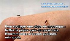 70 Meilleures Images Du Tableau Anti Moustique
