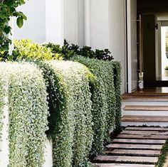 Gorgeous side garden and entryway / Hermoso jardín lateral Dream Garden, Home And Garden, Garden Front Of House, House Front, Outdoor Walkway, Paver Walkway, Side Walkway, Paver Sand, Paver Edging