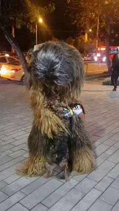 """""""Um, excuse me Mr. Your Wookie is getting away."""" This was filmed on Kashyyk, WITHOUT the knowledge of the Wookies, as a newborn meets the elder for the first time Cute Funny Animals, Cute Baby Animals, Funny Cute, Funny Dogs, Animals And Pets, Wild Animals, Cute Puppies, Cute Dogs, Cute Babies"""