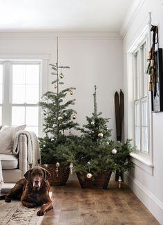 Perfect White Paint Color | Bistro White - Valspar boxwoodavenue.com