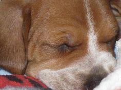 My Redtick Puppy Bailey!