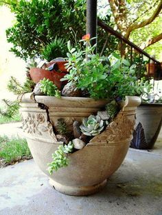 Excellent - there are always plenty of broken pots Broken Pot Garden Garden Frogs, Garden Art, Garden Design, Succulent Pots, Cacti And Succulents, Succulent Containers, Potted Plants, Container Plants, Container Gardening