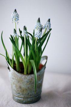 春の鉢植え