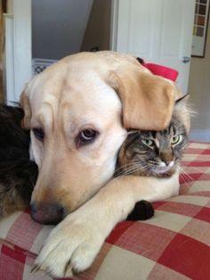 Ja ik weet het het is behoorlijk ziekelijke een hond met een kat als vriend maar ik hou van dit lelijke ding.