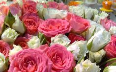 Google+ App, Google, Flowers, Plants, Roses, Apps, Plant, Royal Icing Flowers, Flower