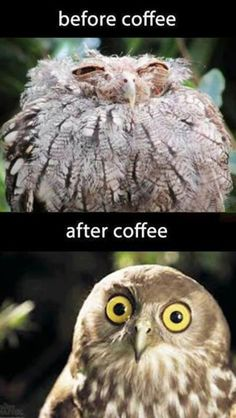 HAHAHA the first one is my bro in the morning before his coffee XD and the after is him too O_O