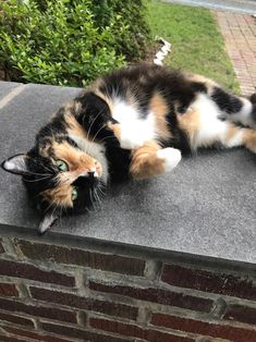 Meet Arbus shes pretty and likes to pose for pictures by liae__ cats kitten catsonweb cute adorable funny sleepy animals nature kitty cutie ca
