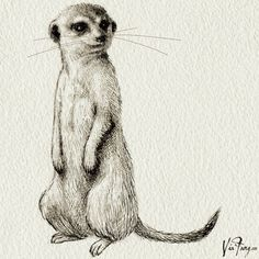 one of the meerkats for TRAD Philosophy 2014 autumn/winter lookbook #meerkat