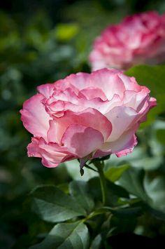 Flower - Koleksiyonlar - Google+