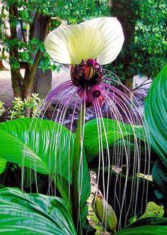 Unique Flower.
