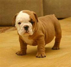 cute puppy - Click image to find more Other Pinterest pins