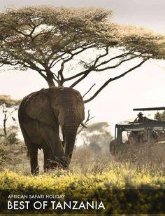 African safari tour: Best of Tanzania fly-in