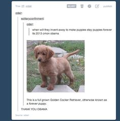 The 24 Most Important Questions Ever Asked On Tumblr. I found a couple of these way too funny