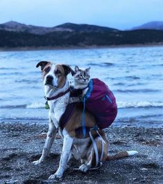 Meet Henry & Baloo, the cat and dog duo hiking through life - Dogs Monthly