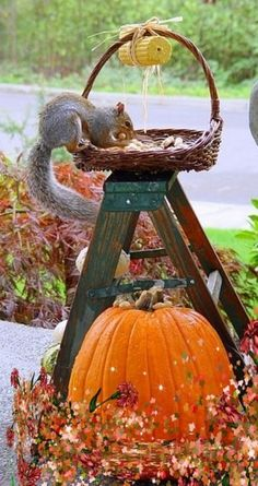squirrel - Autumn Fall Pumpkin