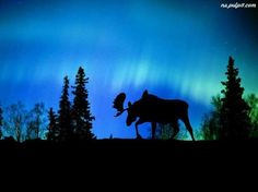 Fall evenings with a hint of Northern Lights. Oh, and a Moose!