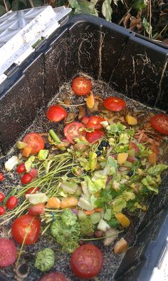 Vermiculture (worm composting)