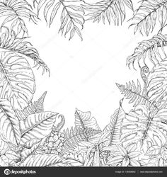 ... leaves of tropical plants. Monochrome square floral frame. Monstera, dieffenbachia, fern, palm fronds sketch. Black and white illustration coloring page ...