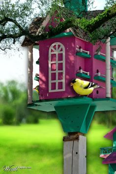 Inviting for the birds!