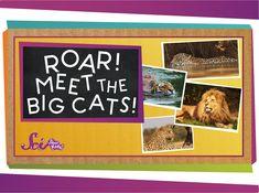Roar! Meet the Big Cats!