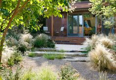 Ornamental Grasses Garden Design Grace Design Associates Santa Barbara, CA Cool Landscapes, Beautiful Landscapes, Santa Barbara, Plant Design, Garden Design, Fresco, Ornamental Grasses, Backyard Landscaping, Landscaping Supplies