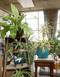 Tropical Plants keeps our interior alive Tropical Plants, Interior, Indoor, Interiors