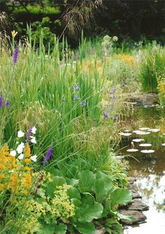 Pond surrounded by well-established garden planting. I expect this is teeming wi… - gardenplants Garden Pond Design, Bog Garden, Garden Pool, Landscape Design, Landscape Plans, Vegetable Garden, Backyard Water Feature, Ponds Backyard, Backyard Waterfalls