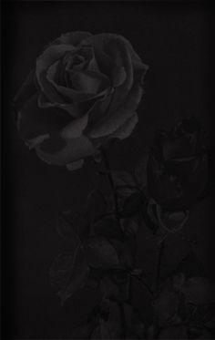 Black Rose Image Wallpaper picture and wallpaper