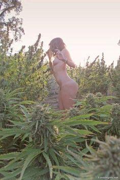 Marijuana Field and naked girl. #yummy #marijuana #legalize #peace