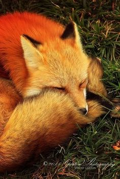 Forest Animals, Nature Animals, Animals And Pets, Beautiful Creatures, Animals Beautiful, Cute Baby Animals, Funny Animals, Wolf Hybrid, Fox Pictures