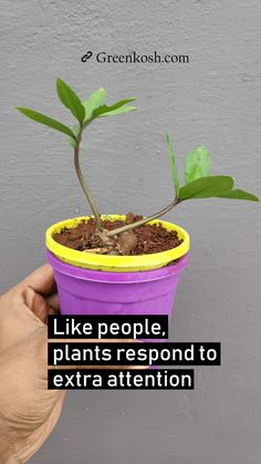 Plant Quote: Like people, plants respond to extra attention. If agree, then pin it.