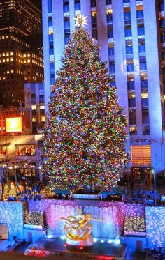 Christmas tree, New York City