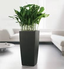 The art of decorating with tall planters. | Pool | Pinterest ...