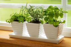 Man benötigt keinen Garten, um sich einen Kräutergarten anzulegen. Die meisten Kräuter fühlen sich in Töpfen genauso wohl wie im Beet.